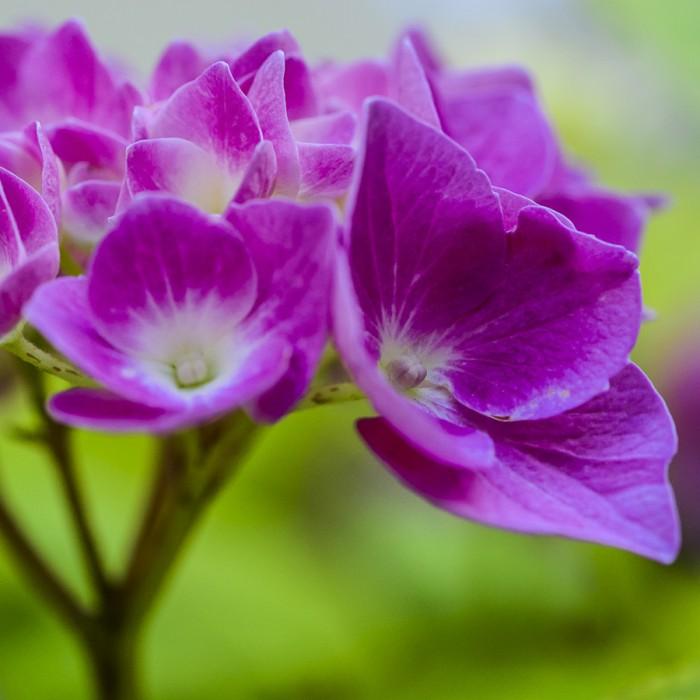 GLASSCHNEIDEBRETTER - floral