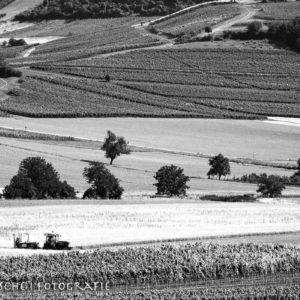 Heimat in den Weinbergen von Wolfsheim